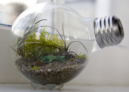 How To… Make a Tiny Terrarium in a Light Bulb!