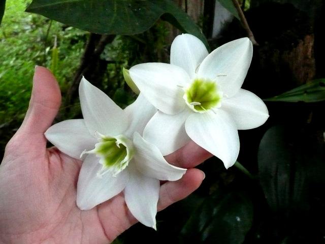 Gorgeous white flowers found in the garden - photo by Jessica Van Den/Epheriell
