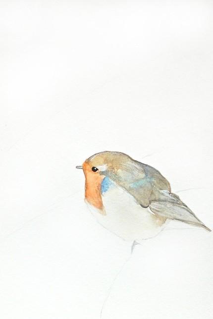 Beautiful Illustrated Birds – Mai Autumn