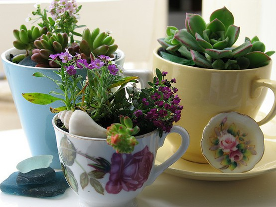 Epheriell Designs Teacup Succulents