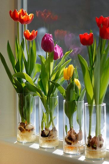 Today I Like.. {6/2/12} Tulips on the Windowsill